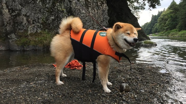 Maru is not a greatest swimmer, so her dad is helping her. With a little more pr...